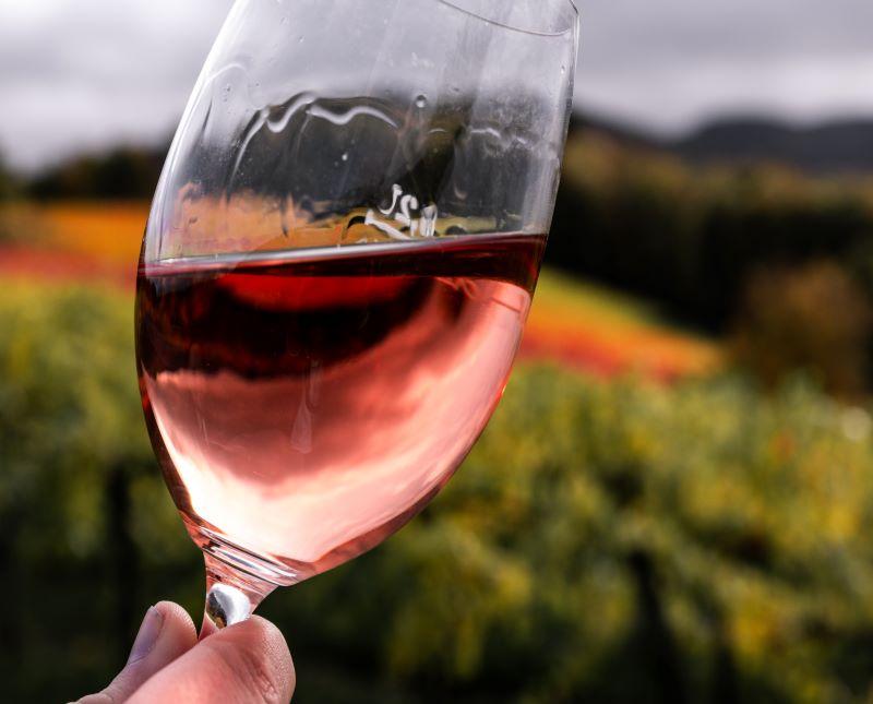 Vino garnacha